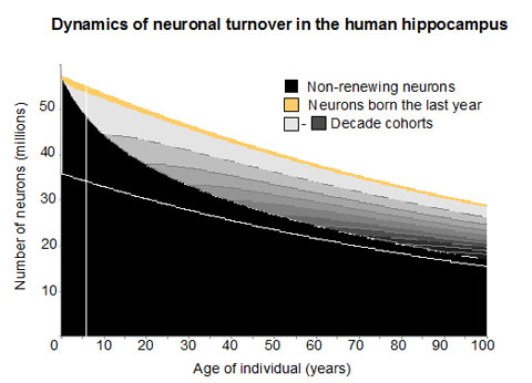 Neurons over Time