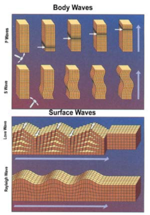 An image of Primary (P) and Secondary (S) seismic waves