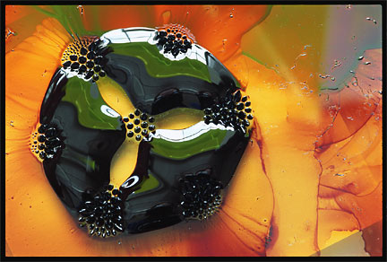 Ferrofluid, with permanent magnets underneath (photo courtesy of Felice Frankel, MIT)