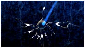 When the opsins open, they change the voltage of the neuron, activating the neuron.