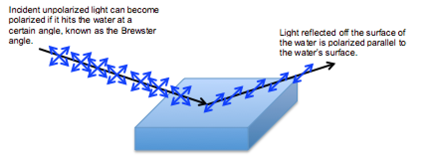 Light that strikes the surface of a body of water is absorbed unless it is polarized in a direction parallel to the water's surface.