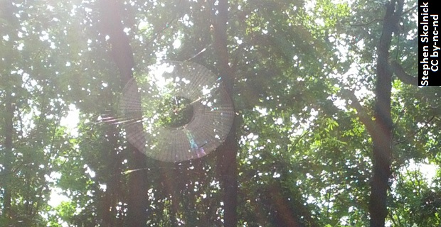 Rainbow in a Spiderweb<br /> The thinly-spaced strands of a spider's web create a natural diffraction grating when light shines through the dew collected on them.